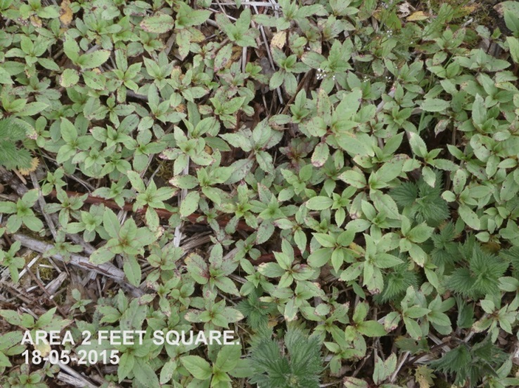 Balsam coverage example 18-05-2015.jpg